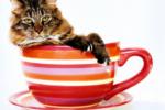 Kattencafe Kopjes-Amsterdam Cat Cafe-featured