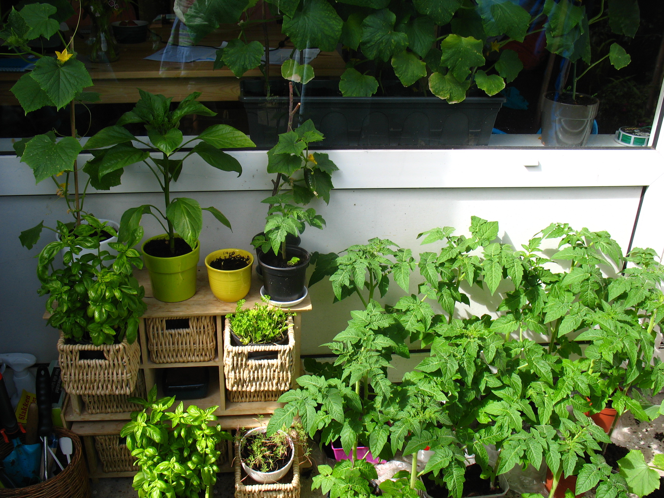 urban gardening in amsterdam expat republic. Black Bedroom Furniture Sets. Home Design Ideas