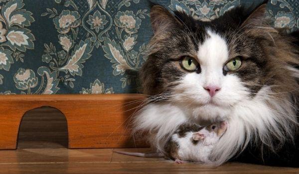 Mice in Amsterdam-cat
