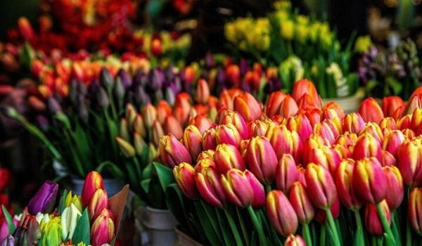 Markets in the Netherlands-flower