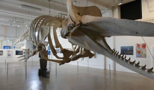 Nature Getaways in Tilburg-Natuurmuseum Brabant