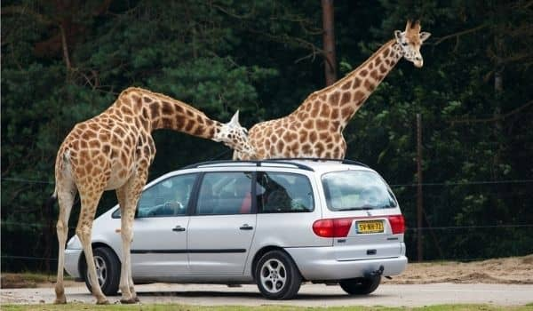 Nature Getaways in Tilburg-safaripark beekse bergen