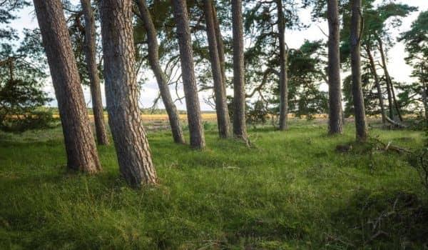 6. Hoge Veluwe National Park